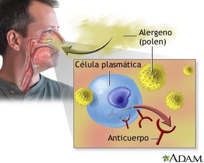 alergia3c