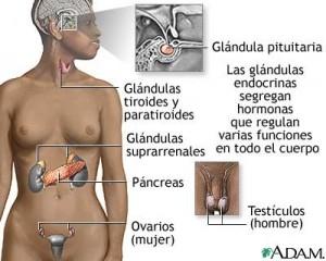 pituita1